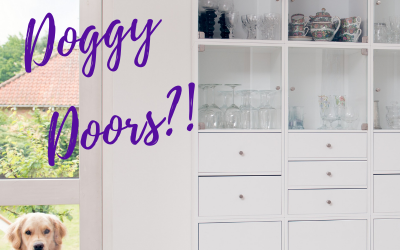 Should My Dog Have Access to an Outdoor Doggy Door in Lakeland, Fl?