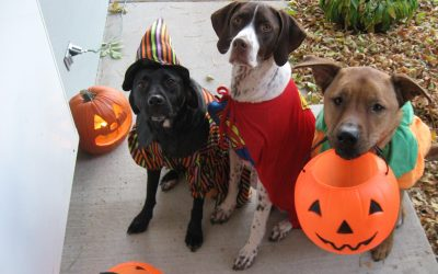 The Scary Truth about Pets During Halloween