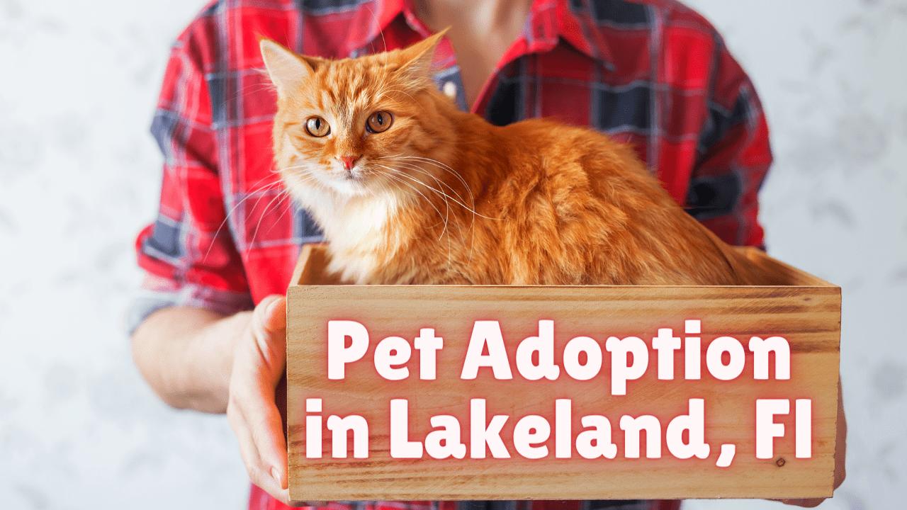 Pet Adoption Lakeland, Fl Atta Boy!