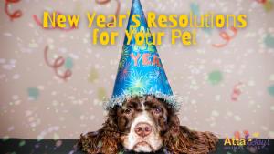 dog tips + resolutions
