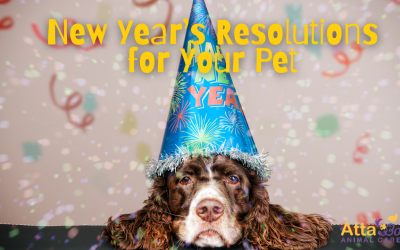 9 New Year Resoultions for Your Pet