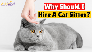Cat Sitter Pet Sitter