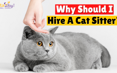 Why Should I Hire A Cat Sitter?